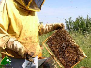 apibio